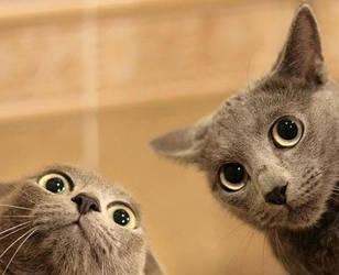 Cats by buketlovely