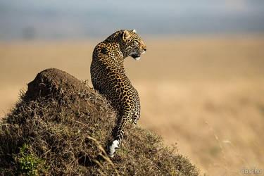 leopard on termite hill by DaSchu