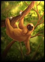 Sloth by DolphyDolphiana