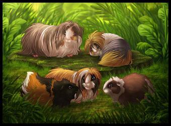 Guinea Pigs by DolphyDolphiana