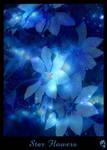 Star flowers by DolphyDolphiana