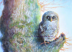 A little tawny owl by LauraPex