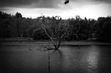 Dead Tree by BlackCometCometh