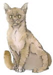 we were born in the valley // leafpool by StrawberryyLemonade