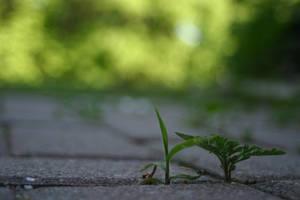 Tiny Plants by Healer-Guy