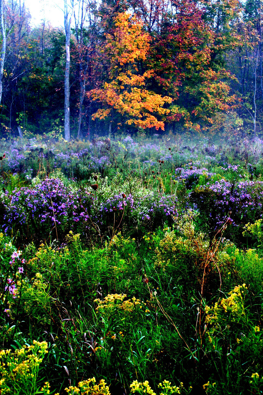 Misty Garden by Healer-Guy