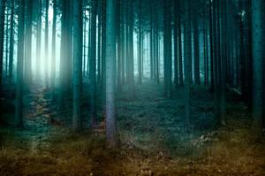 Foggy forest. by kryminalistycy-STOCK