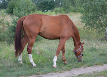 Horse by kryminalistycy-STOCK