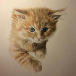 Cat Chopper by AnastasiaTsepeleva
