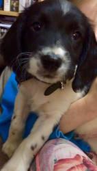 My new puppy Merlin by Wallzy