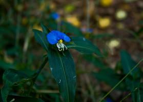 Blue Soldier by LeeAnneKortus