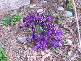 Flowers by BlueRockAngel
