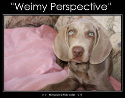 Weimy Perspective by AllNighter09