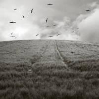 Wheat Field by SoorPus