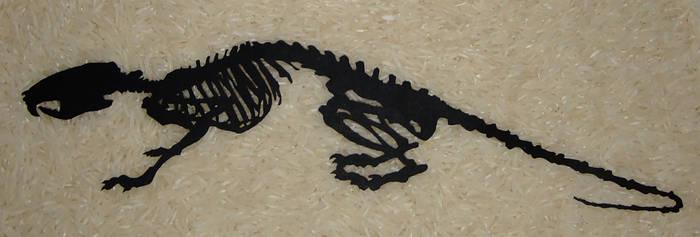 Rat skeleton papercut by Carpe-argillum