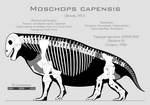Moschops capensis skeletal reconstruction by SpinoInWonderland