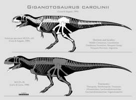 Giganotosaurus carolinii skeletal reconstructions by SpinoInWonderland