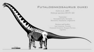 Futalognkosaurus dukei skeletal reconstruction by SpinoInWonderland