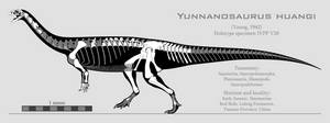 Yunnanosaurus huangi skeletal reconstruction by SpinoInWonderland