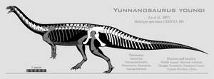 Yunnanosaurus youngi skeletal reconstruction by SpinoInWonderland