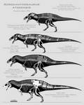 Acrocanthosaurus atokensis skeletals by SpinoInWonderland