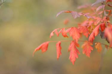 Orange2 by PhotoStellArt