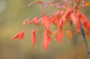 Orange3 by PhotoStellArt