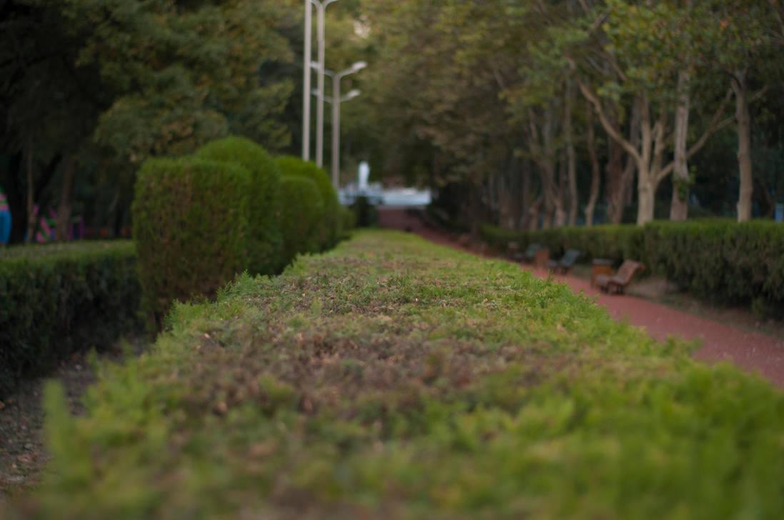 Vpark Bushes by PhotoStellArt