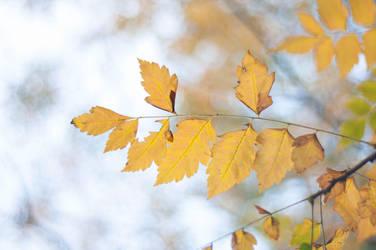 Yellow by PhotoStellArt