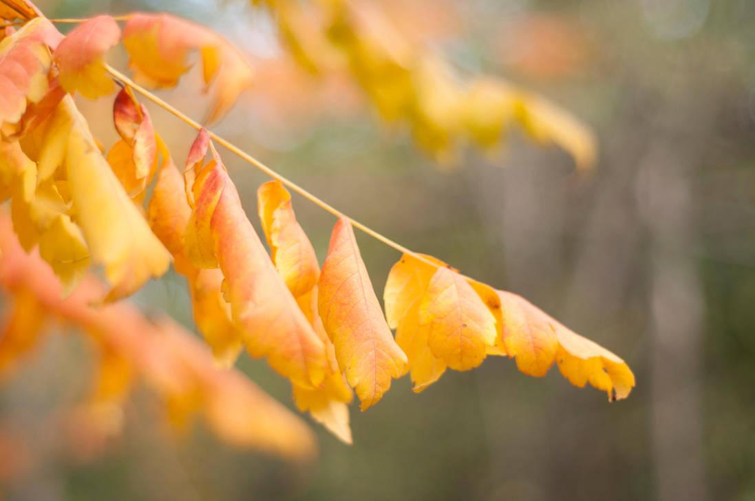 Yellow 1 by PhotoStellArt
