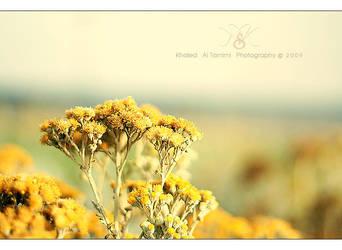 .. Silence .. by KhAlEd46