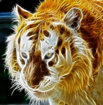 Golden Tiger by bastler