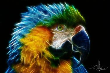 Ara Parrot by bastler
