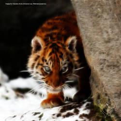 Tiger Cub by bastler