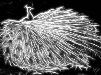 White Peacock by bastler