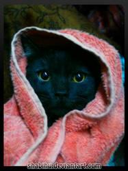 Al-Kitty Stare by Shabihu