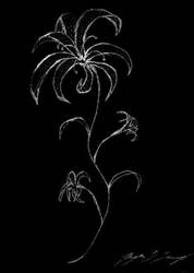 Stargazer Lily -- HELP by cuttheredwire
