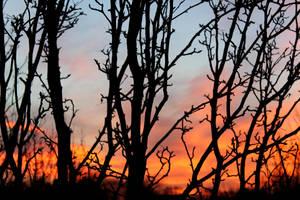 Firey Sky at Dusk by MadiUhart