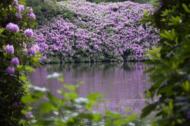 Rhododendron Pond by Benthor
