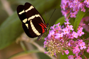 Butterfly 2 by Benthor