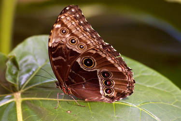 Butterfly 4 by Benthor