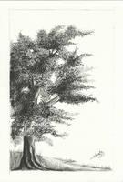 Oak Tree by aakritiarts
