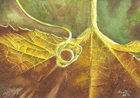 Gourd Tendril by aakritiarts