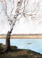 Birch Tree by aakritiarts