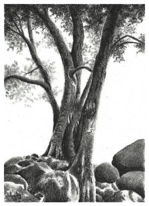 Eucalyptus tree by aakritiarts