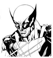 Wolverine SOTD by RobertAtkins