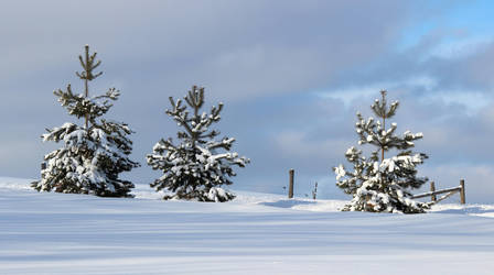 Winter Trees by boogster11