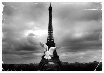 Dove in Paris by Asunaphel