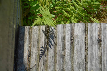 A Fern Casting A Shadow by ianwh