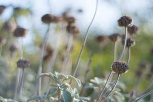 Seed Pods by ianwh